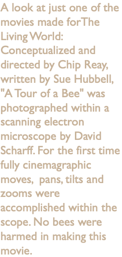 "A look at just one of the movies made forThe Living World: Conceptualized and directed by Chip Reay, written by Sue Hubbell, ""A Tour of a Bee"" was photographed within a scanning electron microscope by David Scharff. For the first time fully cinemagraphic moves, pans, tilts and zooms were accomplished within the scope. No bees were harmed in making this movie."